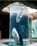 旭山動物園の歴史